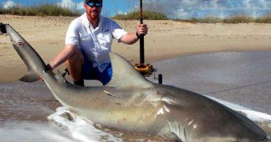 Shark Fishing Vide